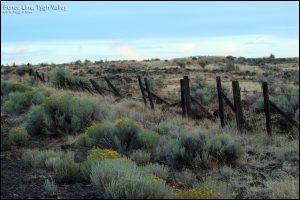 Fence Line, Tygh Valley, Oregon Copyright 2016, Peggy Ann Rowe. Duplication/Modification with permission only.