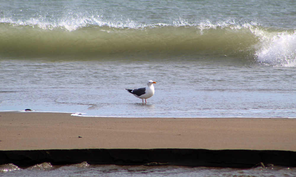A seagull friend who posed for many shots that day.