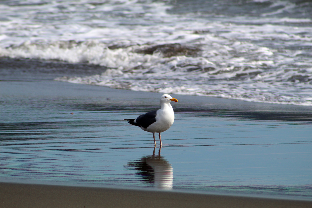 My seagull friend again.