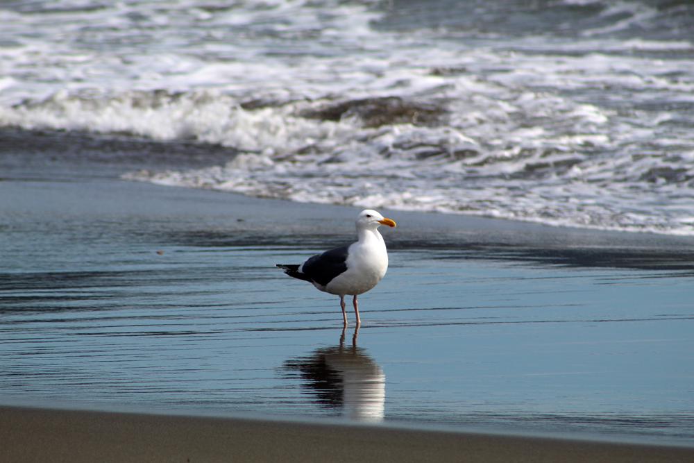 My seagull friend again.